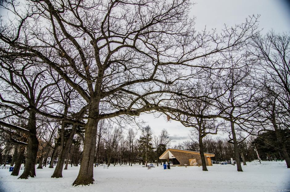 winter highpark